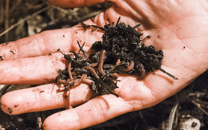 what are worm castings and how to use them