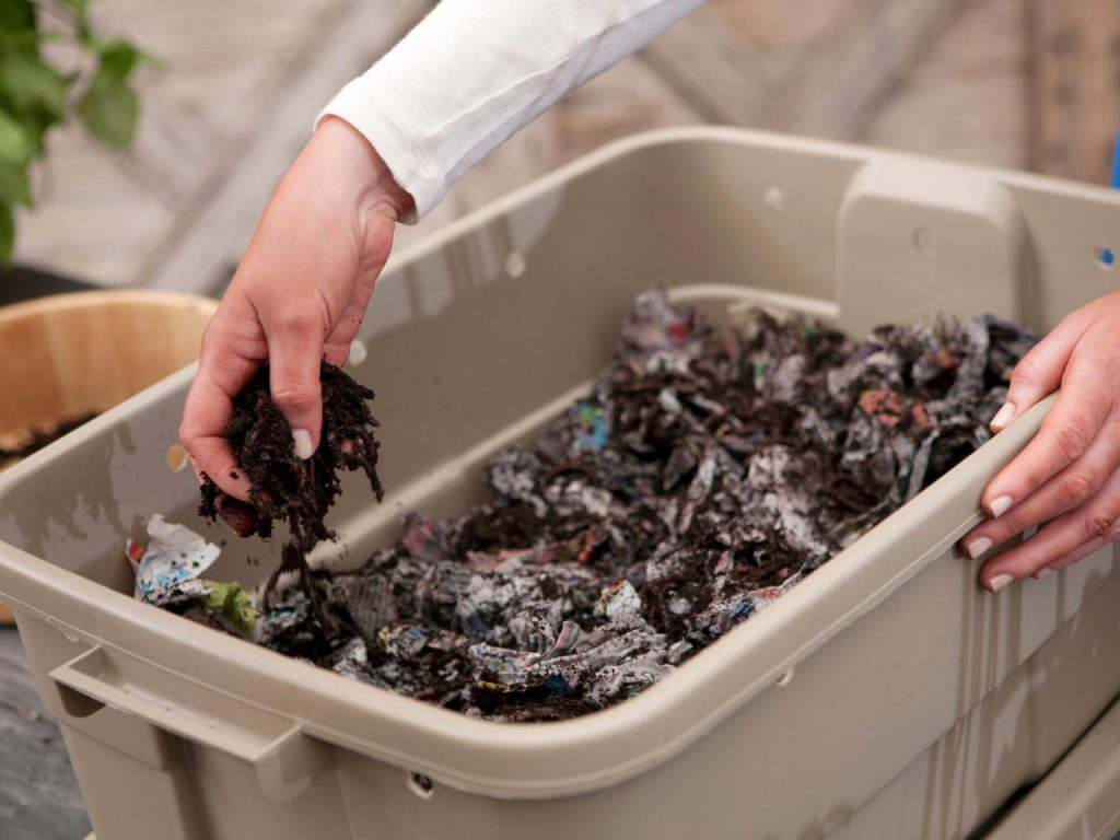worm castings created by vermicomposting