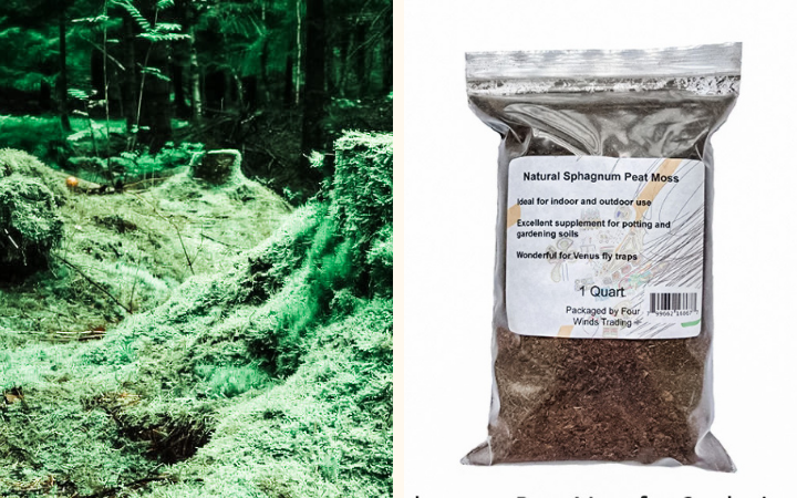 peat moss for worm bedding